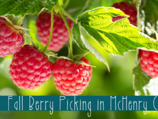 faall berry picking in mchenry county