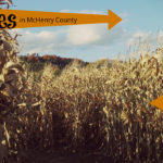 Corn Mazes in McHenry County