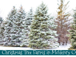 tree farms mchenry county
